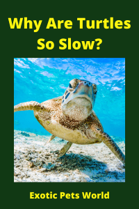 Why Are Turtles So Slow?