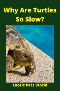 Why Are Turtles So Slow_ (4)