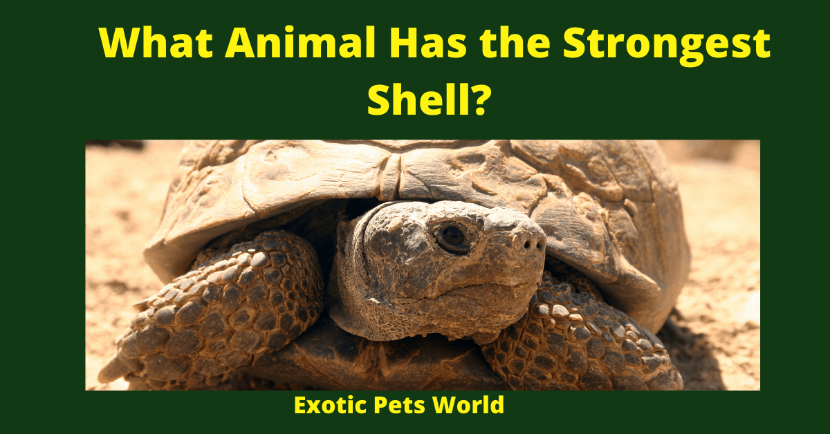 What Animal Has the Strongest Shell_