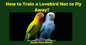 How to Train a Lovebird Not to Fly Away?