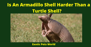 Is An Armadillo Shell Harder Than a Turtle Shell?